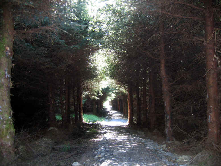 Part of Alwen trail going through a forest