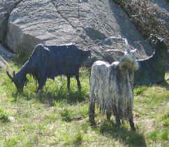 Metal sculptures of two mountain goats
