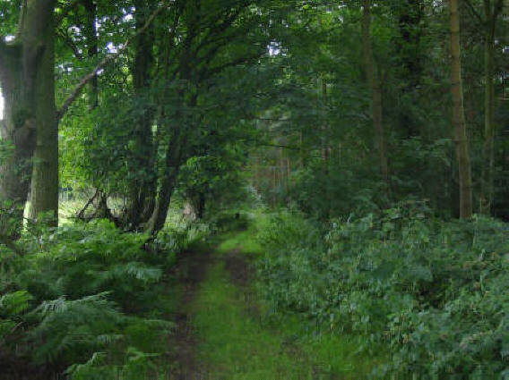 Photo of path through Peckforton Moss
