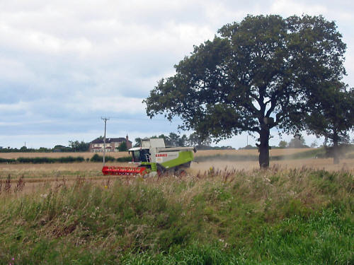 phot of combine harvester harvestin wheat near the Walk Mill